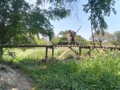 Preparacion puente